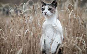 Picture field, cat, ears, stand, cat-meerkat