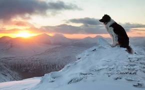 Picture winter, sunset, mountains, dog, The border collie