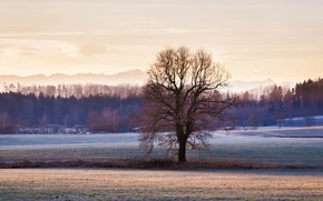 Picture winter, frost, forest, mountains, tree, field, the village