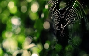 Picture greens, web, Spider