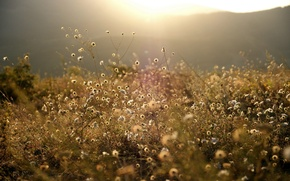 Picture FOREST, NATURE, GRASS, MOUNTAINS, The SUN, FLOWERS, LIGHT, WHITE, GLADE, VEGETATION, RAYS, MEADOW, LAWN, BRIGHT