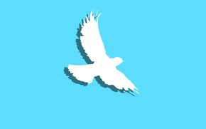 Picture minimalism, background, bird