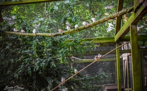 Picture Nature, Birds, Park, Animals, Sorin Ochea Photohraphy