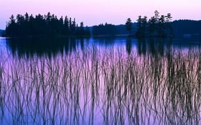 Picture forest, the sky, trees, sunset, river, plants