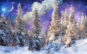 Picture winter, forest, the sun, stars, clouds, snow, trees, glare, photoshop, a month, fantasy