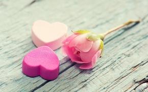 Picture flower, background, tree, pink, widescreen, Wallpaper, mood, heart, rose, petals, wallpaper, bark, heart, widescreen, background, …