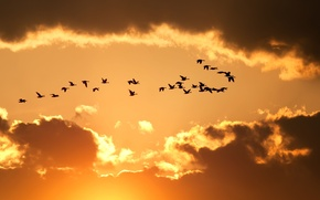 Picture widescreen, widescreen, background, nature, HD wallpapers, Wallpaper, background, birds, flight, full screen, clouds, the sky, ...
