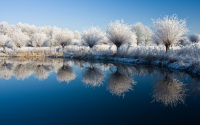 Picture trees, nature, lake, tree, landscapes, plants, the bushes, lake, shrubs, winter water