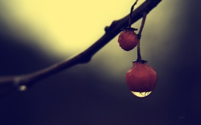 Wallpaper macro, darkness, drop, berry