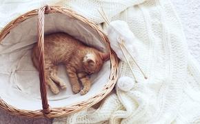 Picture kitty, basket, scarf, yarn, Kittens