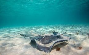 Picture sand, sea, the bottom, SKAT, underwater world