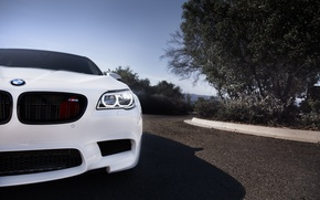 Picture white, bmw, BMW, white, the front, angel eyes, f10, daylight