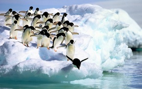 Picture water, snow, Penguins