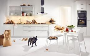 Wallpaper Kitchen, cakes, bulldog