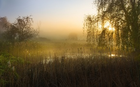 Picture trees, fog, pond, morning, reed