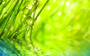 Wallpaper macro, morning, rays, nature, water, sequins, Rosa, grass, drops