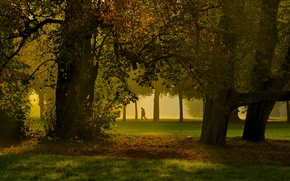 Picture grass, trees, park, autumn, fog, man, shadows, sunlight, foliage