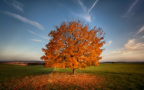 Picture field, autumn, nature, tree, foliage, field
