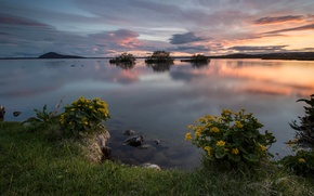 Picture summer, flowers, lake, dawn, calm