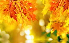 Picture autumn, leaves, color, maple