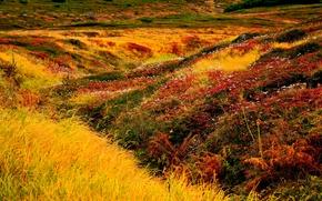 Picture grass, flowers, landscape, Japan, Hokkaido, Following