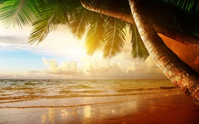 Wallpaper sand, sea, beach, sunset, tropics, palm trees, shore, summer, beach, sea, ocean, coast, sunset, sand, ...