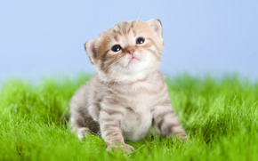Picture kitty, baby, cute