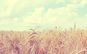 Picture wheat, field, the sky, clouds, landscape, nature, ears, sky, field, landscape, nature, clouds, 2560x1600, spikes, …