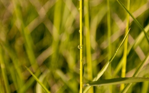 Picture Grass, Water, Spring, Reflection, Meadow, Sunlight, Droplet