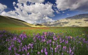Picture field, flowers, hills, Maki, Italy, cornflowers, viola, Umbria