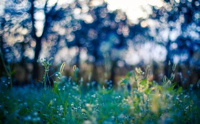 Picture field, grass, trees, stem, bokeh