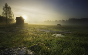 Picture field, landscape, nature, fog, house, horses, morning