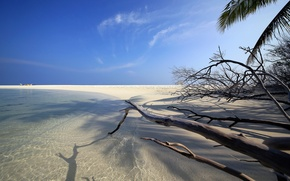 Picture sand, beach, branches, the ocean, shore, island, The Maldives, Maldives, Embudu