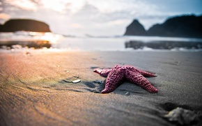 Picture sand, beach, nature, star