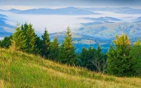 Picture grass, fog, tree, hills
