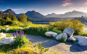 Wallpaper forest, Carpathians, the sun, summer, greens, lake, path, shore, the bushes, trees, mountains, Tatras, Slovakia, ...