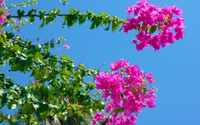 Picture flower, the sky, leaves, tree
