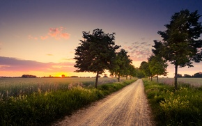 Picture road, trees, sunset, nature, field, the evening