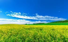 Picture The sky, Nature, Clouds, Field, Rape