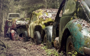 Picture road, forest, machine, moss, scrap