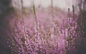 Picture flowers, color, pink, tarnish