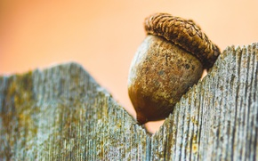 Picture macro, background, brown, acorn