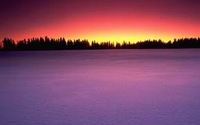 Picture trees, sunset, Snow