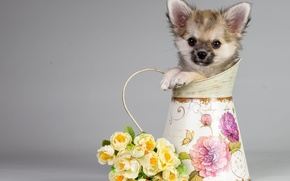 Picture flowers, background, dog, bouquet, pitcher