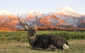 Picture mountains, portrait, Deer