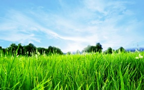 Picture grass, spring, horizon