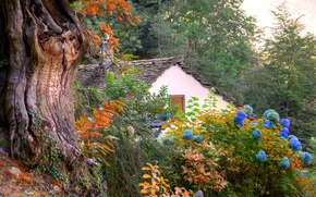 Picture roof, trees, flowers, mountains, house