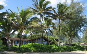 Picture beach, summer, house, palm trees