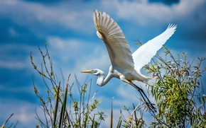 Picture The SKY, WINGS, WHITE, BIRD, STORK, HERON