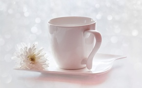 Picture flower, glare, Cup, saucer, chrysanthemum